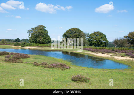 View of mogshade pond in the new forest, surrounded by grass, heathland and trees. - Stock Image