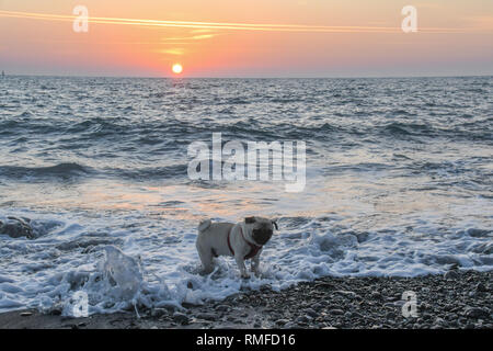Newlyn, Cornwall, UK. 15th Feb, 2019. UK Weather. It was a warm colourful sunrise over Mounts bay this morning, as seen by the photographer and his pug, Titan, this morning. Credit: Simon Maycock/Alamy Live News - Stock Image