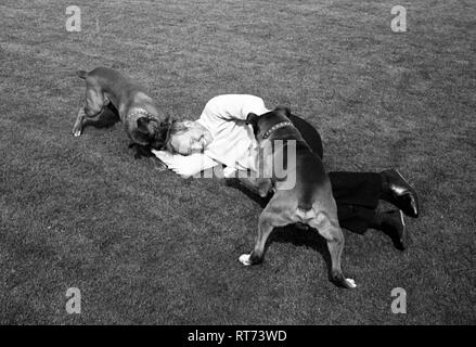 John Surtees with his pet Boxer dogs 1966 - Stock Image