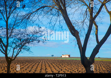 Vineyard in winter. Manjavacas, Cuenca province, Castilla La Mancha, Spain. - Stock Image