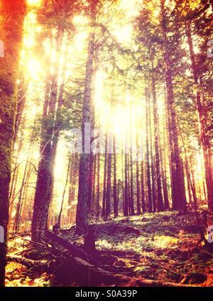 Forest scene - Stock Image
