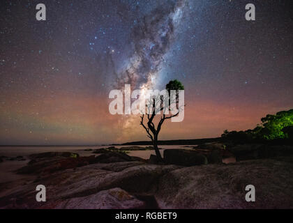 Lone tree in silhouette under the Milky Way with red airglow on horizon. - Stock Image
