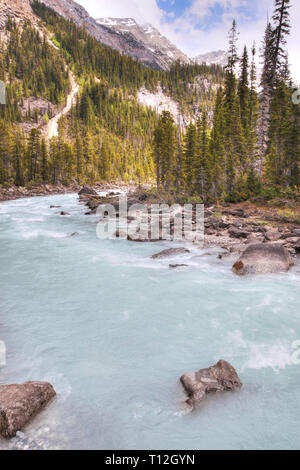 Glacier-fed waters from Takakkaw Falls flow into Kicking Horse River through Yoho National Park near Field, BC, in the Canadian Rockies of Alberta nea - Stock Image