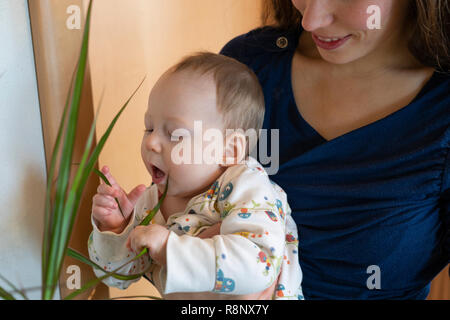 A baby girl being held by her happy mother and exploring her environment by playing with a house plant - Stock Image