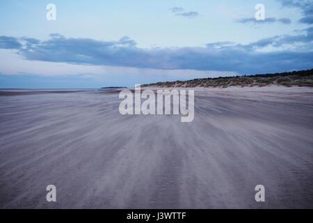 Sand Dunes at Holkham Beach, Wells-Next-The-Sea, Norfolk, England UK - Stock Image
