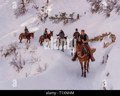 Mule wranglers, Bright Angel Trail, Grand Canyon National Park, Arizona. - Stock Image