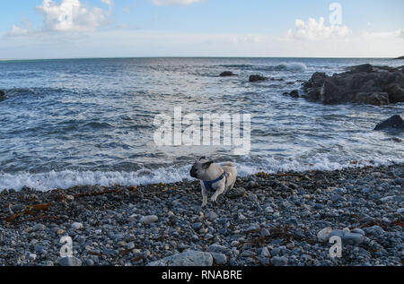 Mousehole, Cornwall, UK. 18th Feb, 2019. UK Weather. In the bright sunshine it felt like a summers day on the seafront at Mousehole, time for the first ice cream of the season. Credit: Simon Maycock/Alamy Live News - Stock Image