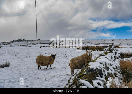 Princetown, Dartmoor, Devon, UK. 3rd April 2019. UK Weather. Snow still lying on the hills ofr Dartmoor this morning. Credit: Simon Maycock/Alamy Live News - Stock Image