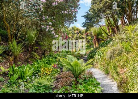 Subtropical Cascade Water Garden at the center of Trebah Garden, Cornwall, England, UK | Subtropischer Water Garden im Zentrum von Trebah Garden, Corn - Stock Image
