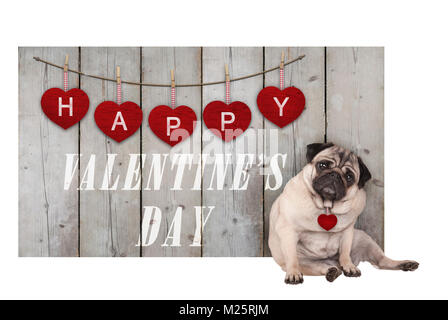 Cute pug puppy dog sitting down next to wooden fence of used scaffolding wood with red hearts and text happy valentines - Stock Image
