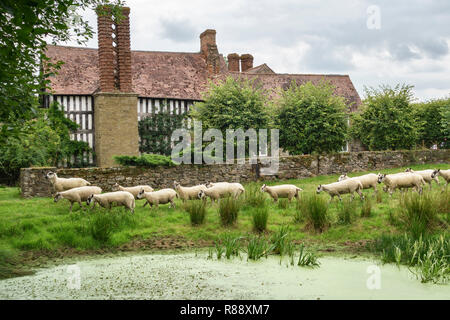 Abcott Manor, Clungunford, Shropshire, UK. A typical sixteenth-century timber-framed English manor house deep in the countryside - Stock Image