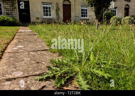 Lazy person's garden, Stroud, Gloucestershire, UK - Stock Image