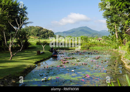 Sacred Lotus flowers (Nelumbo nucifera) pond in Santi Resort hotel beside countryside. Luang Prabang, Laos, Asia - Stock Image