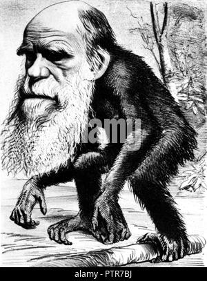 Charles Darwin as an Ape, 1871 cartoon from the Hornet magazine captioned 'A Venerable Orang-Utan a Contribution to Unnatural History' - Stock Image