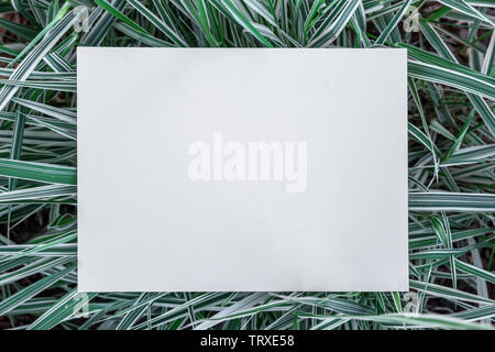 Paper blank on the green grass. Green grass as a frame. - Stock Image
