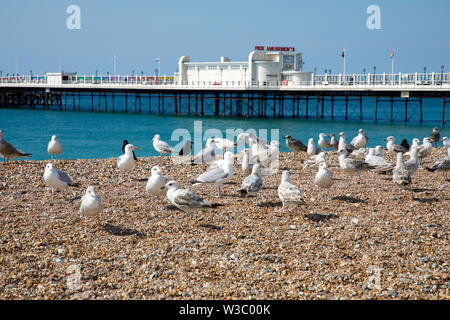 WORTHING, UK - JULY 13, 2019: Sea gulls sitting on the pebbel beach in front of art deco pier in Worthing - Stock Image