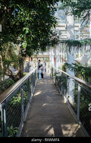 A family standing on a bridge inside The Glasshouse conservatory, Jephson Gardens, Leamington Spa with exotic plants. - Stock Image