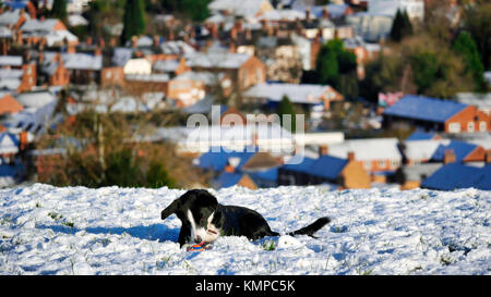 Ashbourne, Derbyshire. 8th Dec, 2017. UK Weather: Border Collie dog having fun plating ball in a  snow covered field - Stock Image