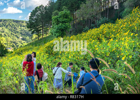 Trippers are exploring, sightseeing and photography in a field wild sunflowers bloom brilliantly colorful nature scene beautiful sunny morning - Stock Image