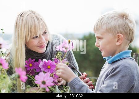 Mother and son cutting organic flowers in garden - Stock Image