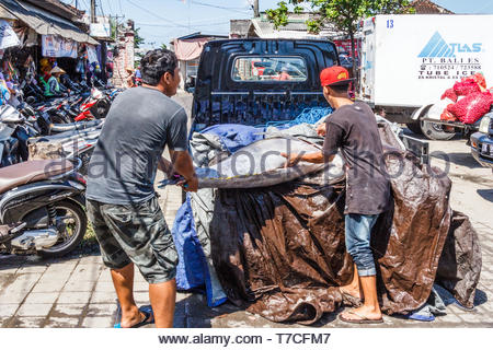 Bali, Indonesia - 30th May 2017: Men loading tuna fish on truck. Many tuna are landed at Jimbaran. - Stock Image