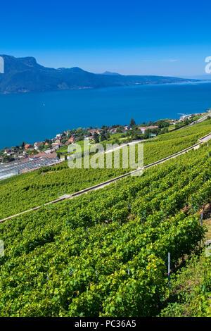 Lavaux terraced vineyards on Lake Geneva - Stock Image