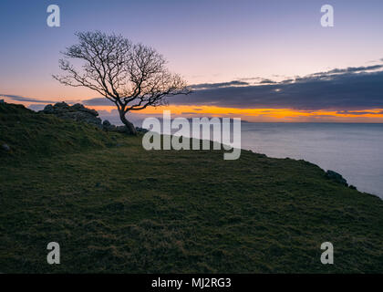 Magical tree in murlough bay in Northern Ireland - Stock Image