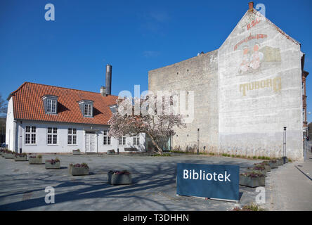 Blooming magnolia tree in front of Lyngby Library and Library Cafe building. Old, faint Red Tuborg beer advert on the wall of neighbouring building. - Stock Image