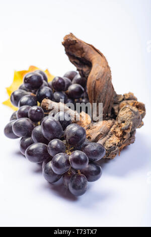Piece of old grapevine and bunch of black grapes on white background close up - Stock Image