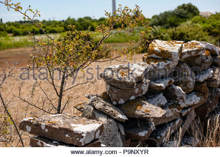 The island Oland, Sweden. Typical limestone. - Stock Image