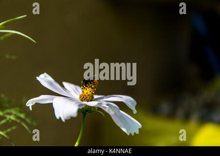 Bee pollinating a flower. - Stock Image