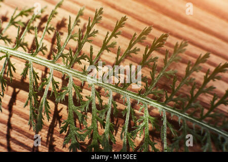 Fresh green leaf on textured wood. Background concept. Free space for your text - Stock Image