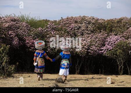 Chengdu, China's Sichuan Province. 23rd Apr, 2019. Two girls dressed in traditional costumes of Miao ethnic group are seen in Yanbian County of Panzhihua City, southwest China's Sichuan Province, April 23, 2019. Over 100,000 mu (66,667 hectares) wild rhododendrons are in bloom in Yanbian County from February to May. Credit: Jiang Hongjing/Xinhua/Alamy Live News - Stock Image
