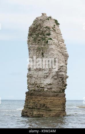 chalk stack, Flamborough Head, Yorkshire coast, British Isles, United Kingdom - Stock Image