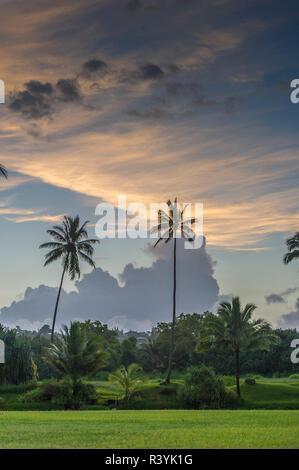 Hanalei Bay, Hawaii, Kauai, Kauikeolani Estate - Stock Image