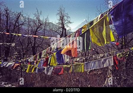 Prayer flags at Muktinath Temples the second most holy place in Nepal on Annapurna circuit in the Himalayas - Stock Image