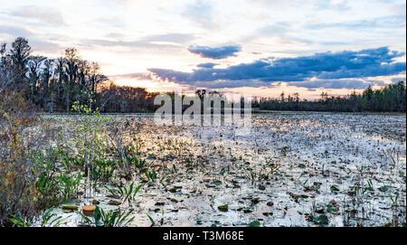 Landscape sunset on east side of Okefenokee swamp refuge. - Stock Image