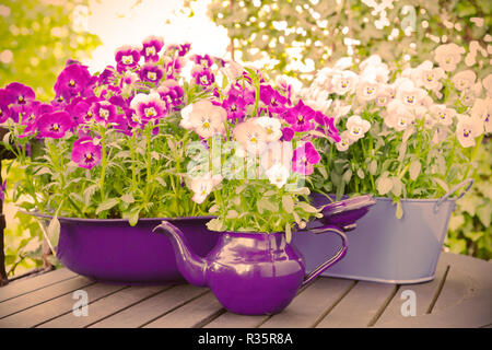 Purple, blue and violet pansy flowers in two pots and an enameled jug on a wooden balcony table in spring, vintage filter effect - Stock Image