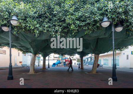 Ficus trees shrouded in nettig to protect the environment below from the soft fruiting bodies. Moraira, Spain. - Stock Image