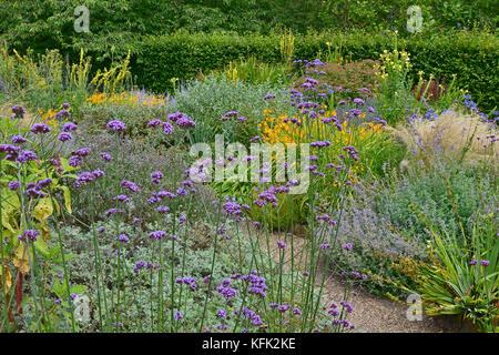 Garden flower border with flowering Verbena Bonariensis, Crocosmia and Verbascum making a colourful display - Stock Image