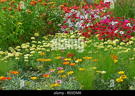 Colourful flower border with a display of mixed Petunias and Gazania flowers - Stock Image