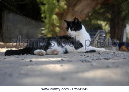 Cats in the street in Crete - Stock Image