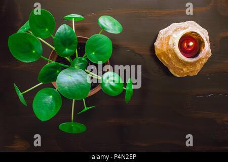 Pilea on Dark Table with Himalayan Salt Lamp - Stock Image