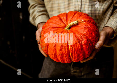 High angle close up of farmer holding red Cinderella pumpkin. - Stock Image