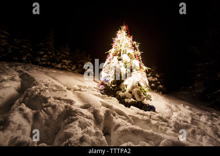 Illuminated Christmas tree on snowy landscape during winter - Stock Image
