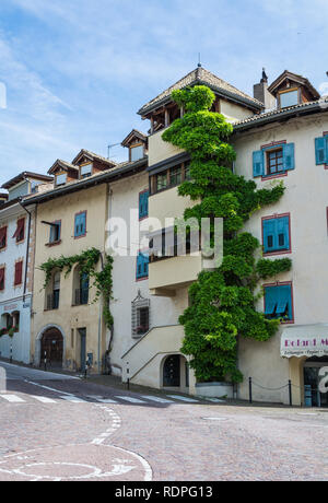 Wisteria plant growing up a house in South Tyrol, northern Italy, Europe - Stock Image