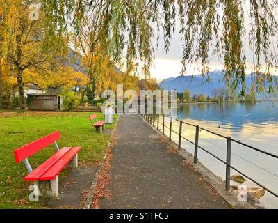 Benches with autumn trees - Stock Image