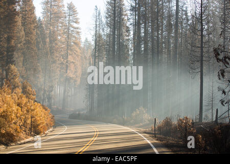 Sunlight shafts through smoke from the King Fire in the El Dorado National forest, California, USA. - Stock Image