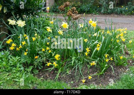 Spring flower assortment Milton 2019 - Stock Image