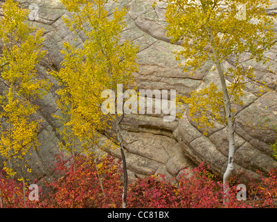 Autumn aspen trees and sandstone cliffs of Walnut Canyon, below Fisher Point, in Coconino National National Forest, - Stock Image